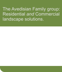 The Avedisian Family group: Residential and Commercial landscape solutions.